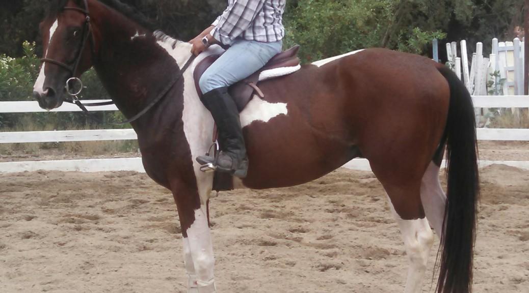 Bailando mounted standing 2